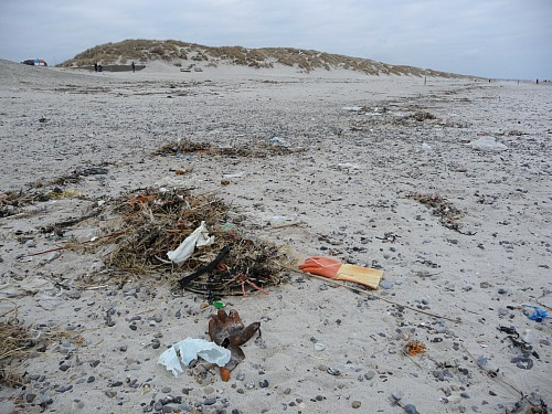 Beach near Henne Strand (DENMARK): Marine Litter washed up on the beach from the Northe Sea during the winter. Here you can see examples of the types of plastics washed up - cord